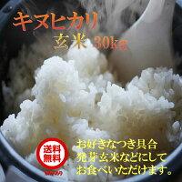 数量限定 送料無料 玄米 キヌヒカリ 30Kg 近江米 29年産 環境こだわり米