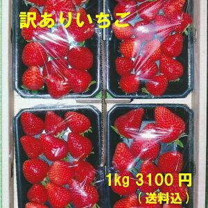 訳ありいちご 特別栽培 ご家庭用におすすめ 愛知県産 ゆめのか フルーツ 1kg(250g×4パック)【送料込】