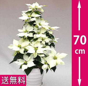 ポインセチア 70cmのタワー7号・白◆お歳暮、クリスマスギフト、プレゼント用のギフトに最適。◆高さ70センチのタワータイプ、コンパクトで場所を選ばずクリスマスの飾り付けに