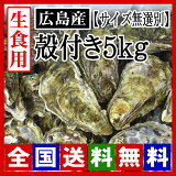 【期間限定】生牡蠣 生食用 殻付き牡蠣5kg  広島牡蠣(サイズ無選別)[お取り寄せ] 牡蠣の大きさは大小様々です。[産地直送] 活きたままお届け致します!