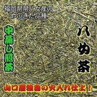 1000円ポッキリ緑茶日本茶送料無料深蒸し茶八女茶煎茶お茶
