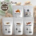 昆虫食 食用 閲覧注意 良質な脂質が含まれた高栄養食 高蛋白