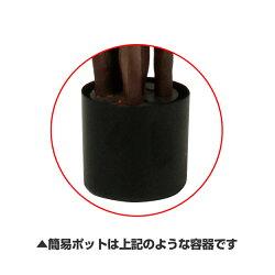 [StylishGreen]アレカヤシPE高さ1900mmLサイズ鉢:簡易ポット