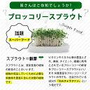 スルフォラファン サプリ ブロッコリースプラウト(約1ヶ月分)送料無料 ダイエット サプリメント ブロッコリー ミネラル ビタミン ファイトケミカル スーパーフード _JD_JH 3