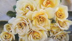 エバンタイユ・ドール(大苗)7号鉢植え バラ苗 四季咲き大輪系(ハイブリッドティーローズ) 河本バラ園 Kawamoto Brand Roses