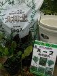ハーブ栽培セット キッチンハーブ4種 ハーブ苗