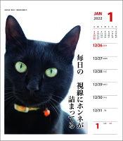 壁掛け 卓上 カレンダー 2022 猫川柳 週めくり スケジュール ねこ APJ 動物写真 書き込み インテリア 令和4年
