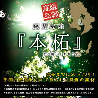 カラー印鑑柘パール12mm【ラムちゃんバージョン】