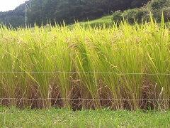 清流綺麗な里、ほたるの郷で特別栽培された仙人米(大分ひのひかり)を今だけ送料無料で!【予約...