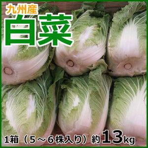 【送料無料】九州(大分、熊本、長崎 )産 白菜 1箱(5〜6株入り)約13kg【同梱包不可】
