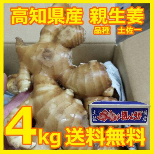 .【送料無料】高知県産 親生姜 4kg入り 1箱 減農薬栽培【代引き不可】