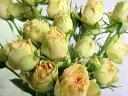 SPミニバラオレンジ(S/アンTクレース(Oなど5本 切花 生け花 花材 ドライフラワーに最適