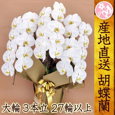 胡蝶蘭 開店祝い 結婚祝い お祝い白 3本立ち 27輪以上 コチョウラン...