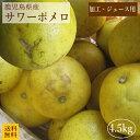 (加工・ジュース用)サワーポメロ9kg(10kg箱) 送料無料 ご家庭用(訳あり)