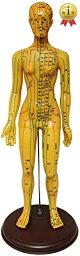 人体模型 ツボ 針灸 鍼灸経穴模型 経絡 モデル 整体 マッサージ 学習用 52.5cm 女性(女性)