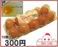 ココットレッド40個【10個入り×4パック】