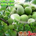 【青梅】小西さん家の青梅(南高梅)【秀品】3kg・6kg・1...