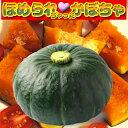 ほめられちゃったかぼちゃ 約10kg(5玉〜6玉)ほめられかぼちゃ・南瓜・カボチャ栄養満点野菜…