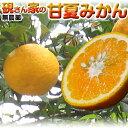 【柑橘 訳あり】2個購入で送料無料♪温州みかん 硯さん家の甘...