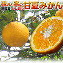 【柑橘 訳あり】2個購入で送料無料!温州みかん 硯さん家の甘...