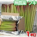 【お試し】無農薬 天然 朝穫りフキ 約1kg(1000g)手...