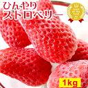 静岡産あきひめ ひんやりストロベリー 冷凍イチゴ 大好評スイ...