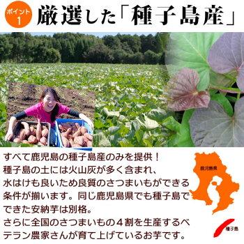 安納芋の干し芋種子島産ブランド国産干しいも高糖度さつまいも安納芋のほしいも干しイモ【150g静岡AA】10