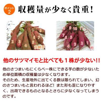 安納芋の干し芋種子島産ブランド国産干しいも高糖度さつまいも安納芋のほしいも干しイモネコポス便送料無料【100g×3袋静岡AA】