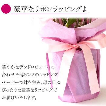 母の日プレゼント花ギフト早割生花鉢植え送料無料スイーツお菓子ギフトセット【静岡AA】