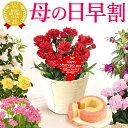 母の日 プレゼント 花 ギフト 早割 カーネーション 生花 ...