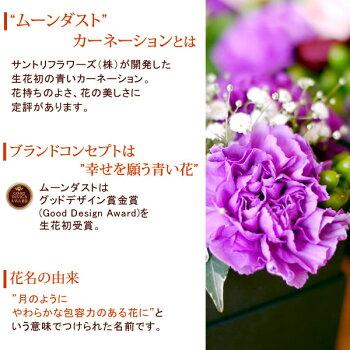 母の日ギフト送料無料ムーンダストカーネーション生花アレンジメントスイーツセットプレゼント【母の日gift】