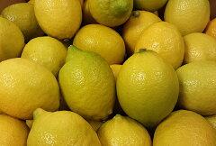 【国産 送料込】広島レモン(エコレモン)L・M玉(キズモノ有り) 1kg(約8〜10玉)送料込(北海...