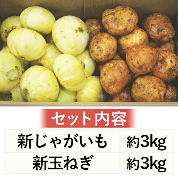 【送料無料】テレワーク応援セール人気10品目野菜セット1日数量限定【お買得】
