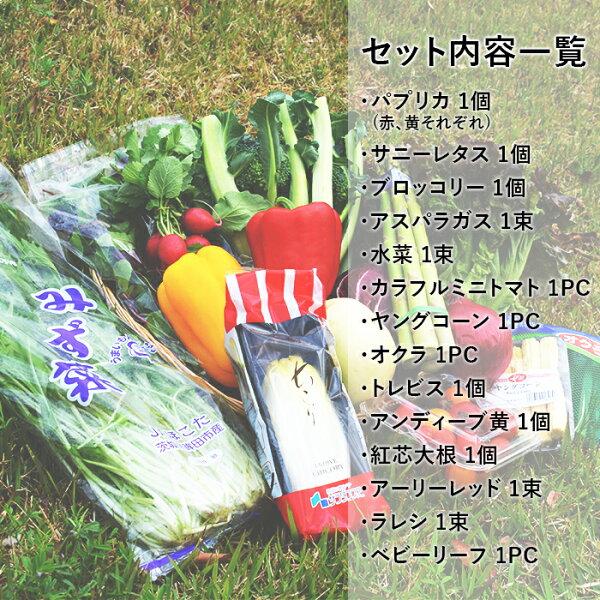 【送料無料】10品目野菜セット