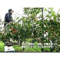 【送料無料】◆皇室献上柿◆完熟特選富有柿L16玉