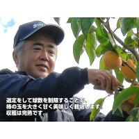 【送料無料】★富有柿L16玉4k箱