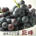 訳あり 巨峰 茨城県 送料無料 巨峰予約 ぶどう フルーツ 巨峰 種あり 約2kg ご家庭用 ブドウ 葡萄 種あり 甘い 美味しい お取り寄せ 産地直送