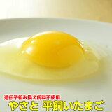 卵 タマゴ やさと平飼い卵 M20個 送料無料 安全安心 産み立て産地直送 たまご 玉子 平飼い 茨城 ギフト お取り寄せ