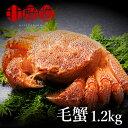 超 特大 1.2kg 毛蟹 毛がに 超特大ジャンボ毛蟹 1尾...