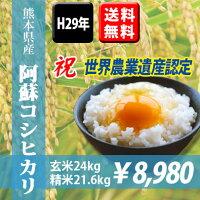 熊本県産阿蘇コシヒカリ24kg