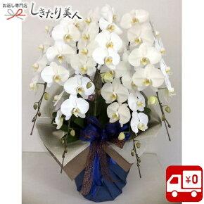 胡蝶蘭5本立てホワイト(ENZ_RAN-PL-W5LL)