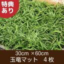 玉竜 マット 4枚 送料無料(関東・東海・関西・北陸)自家栽培 高品質 タマリュウ