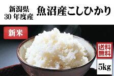 平成30年度産新米 渡辺さんの作った魚沼産こしひかり 5kg【阿部幸製菓】