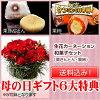 生花カーネーション5号鉢・栗きんとん・栗柿