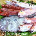 おまかせ鮮魚3,000円〜秋の地魚鮮魚〜鮮魚セット 鮮魚 詰