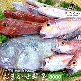 おまかせ鮮魚3,000円〜秋の地魚鮮魚〜鮮魚セット 国産 島根産 日本海 山陰沖 詰め合わせ 直送【天候・漁模様により、お届けまでにお時間をいただく場合がございます。】