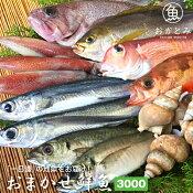 おまかせ鮮魚3,000円『一日漁』〜夏の地魚鮮魚〜