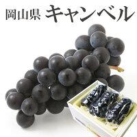 岡山県産キャンベル贈答用700g(3房)葡萄ぶどうブドウギフトお歳暮お歳暮【岡山果物工房】