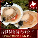 Hotate_katakai5p