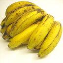 沖縄産 三尺バナナ 約1kg